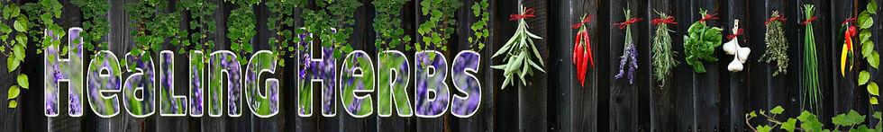 Healing Herbs along a fence drying