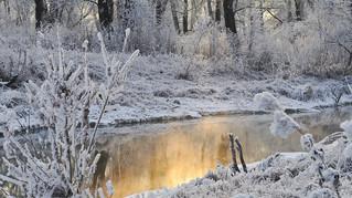 Staying Sane: Winter Wellness Strategies
