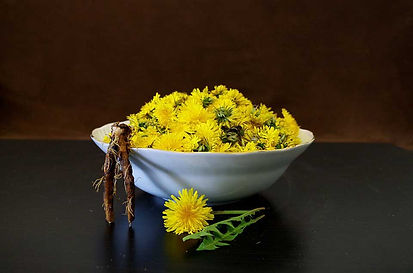 Bowl of dandelions and roots for a salad of health.