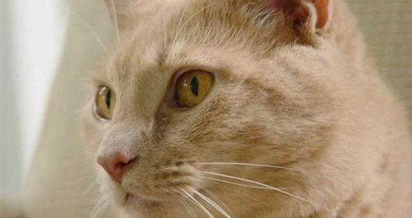 Cat Nutrition, Image of Duke.