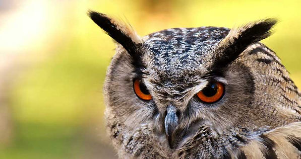 Owl, And the Owl Called His Name, A story written by Larkin Stentz