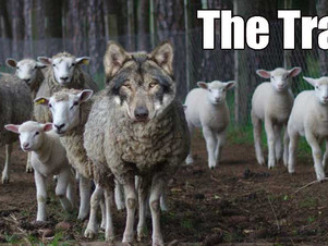 Are You a Sheeple?