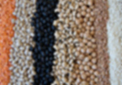 Rolls of assorted legumes and seeds