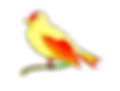 PNG Canary 3kbs.png