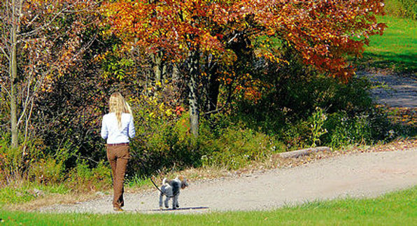 Walking a dog. Stay Young, Move Your Body!