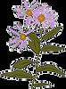 Echinacea flower art