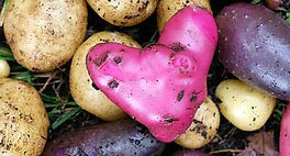 Are Potatoes Healthy You Might Also Like