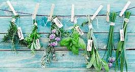 Healing Herbs 15kbs.jpg