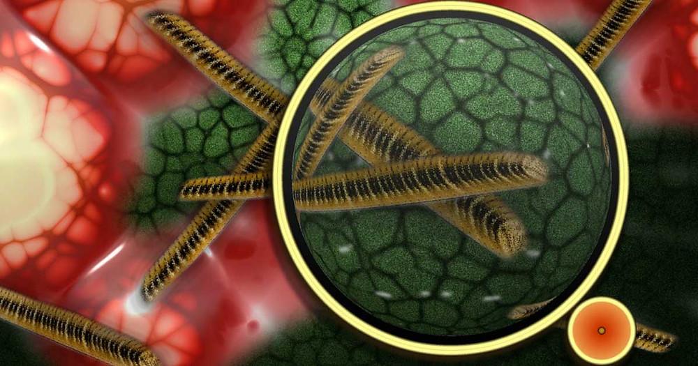 Germs: Friend or Foe?