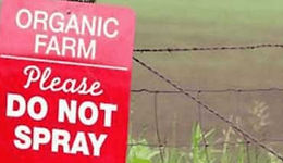 Field and a sign that reads, Organic Farm. Please Do Not Spray. 5 Reasons I Eat Organic