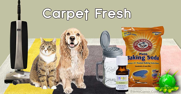 Dog, Cat and vacuum on carpet display with the do it yourself products.
