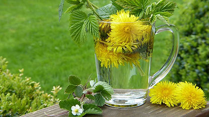 Dandelion, mint and other herbs soaking in a clear cup of water.