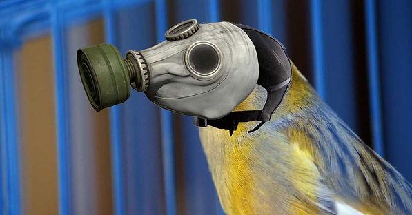 Dangers of Teflon- Canary in a coal mine