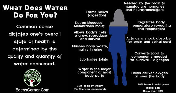 Water: Your Most Vital Nutrient, What Does Water Do For You? Infographic by Eden's Corner.