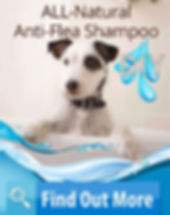 Dog in a bathtub, water and shampoo and find out more.