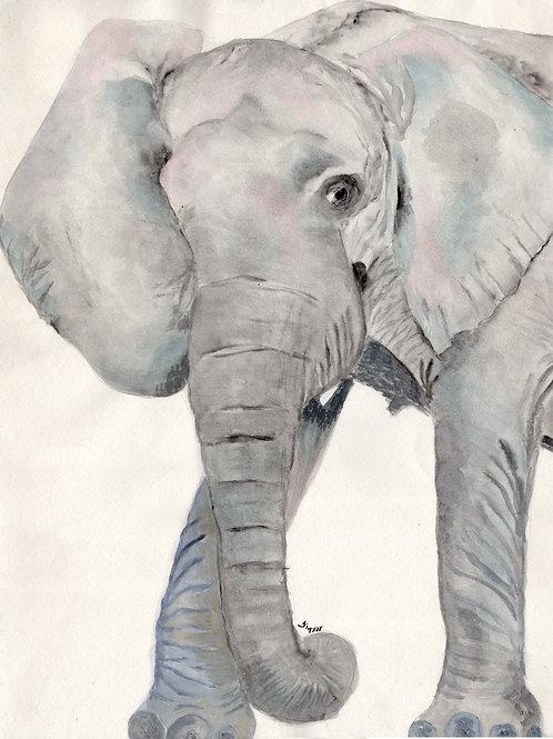 My Elephant