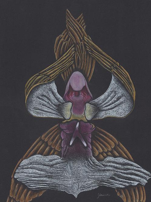Seraphim Orchid