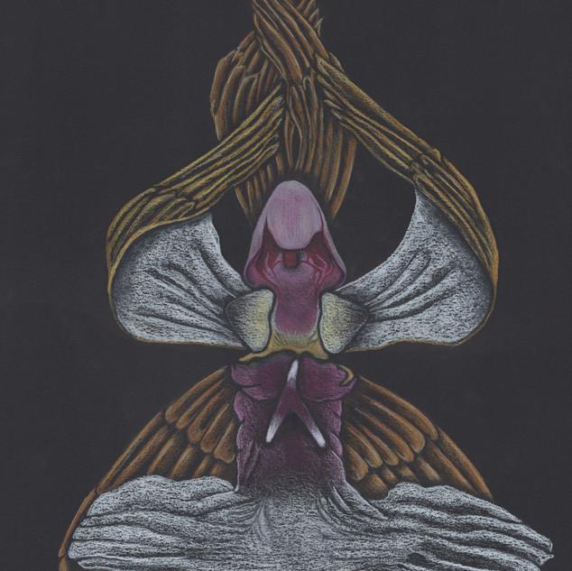 """""""Seraphim Orchid"""""""