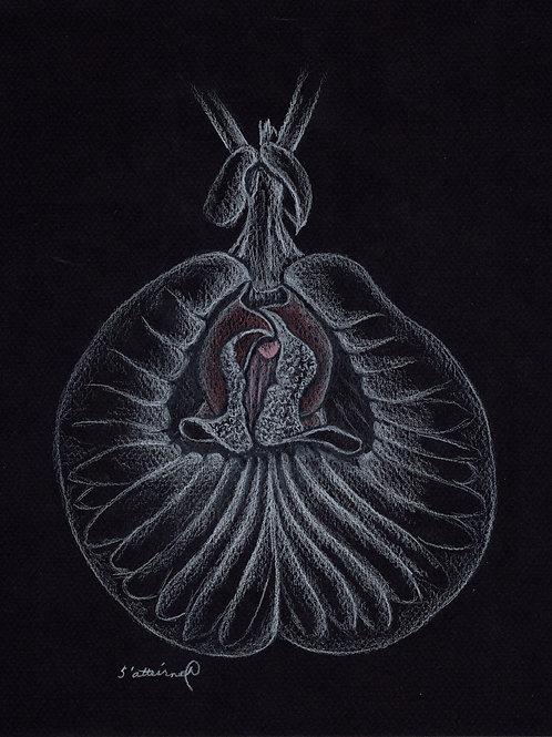 Voluptuous Vulva
