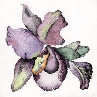 """""""Fematalia Orchid"""""""
