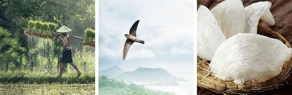 bird's nest_3.jpg