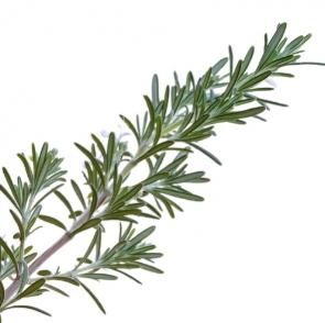 Actiplex (Rosemary)