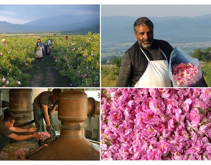 Bulgarian Organic Rose Damascena Water - Enio Bonchev