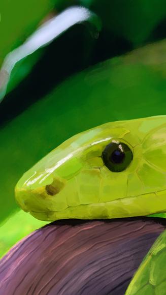 Paint Study: Green Mamba