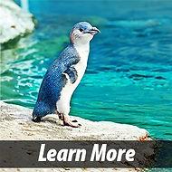 Penguin learn more.jpg