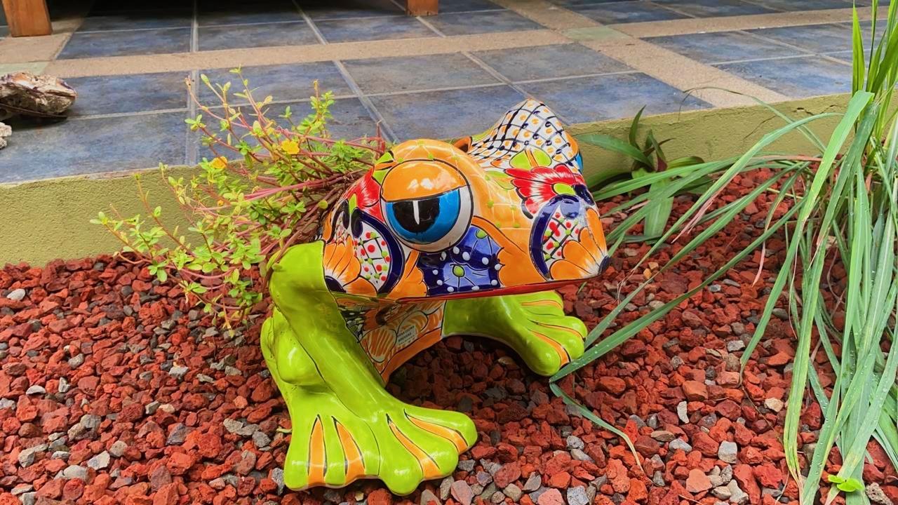 Freddy the Villa Frog