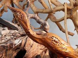 Musée des 1001 racines