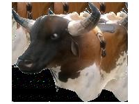 Toro Interactivo capacidad 170 kilos