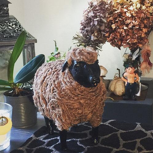 Mouton brun et noir.