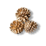 favpng_conifer-cone-download.png