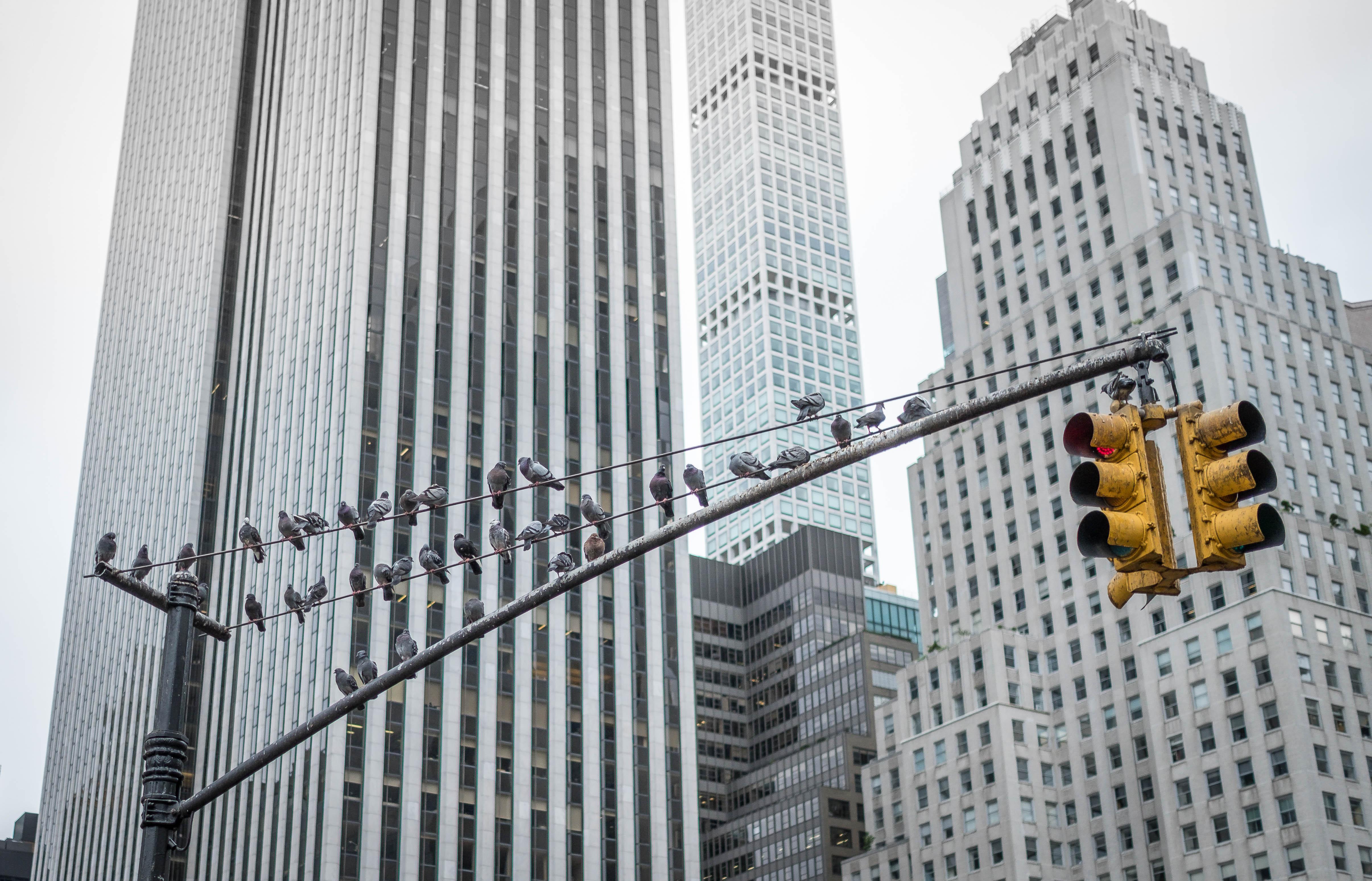 Vögel Ampel