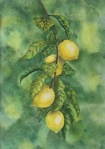 In The Lemon Grove.jpg