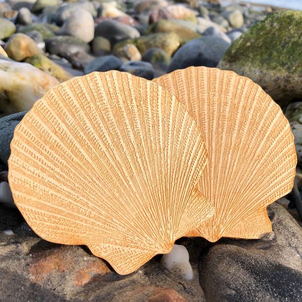 Scallop Shells