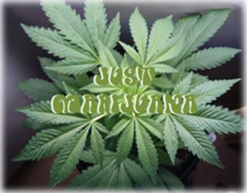 Drunk Driving DUI Marijuana Probation Anger