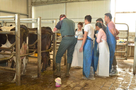 bovine-water-rectum-ah.jpg