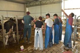 bovine-water-rectum-ag.jpg