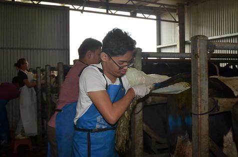 bovine-water-rectum-ar.jpg