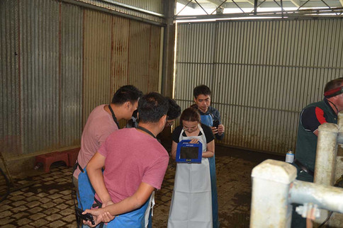 bovine-water-rectum-aq.jpg