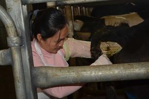 bovine-water-rectum-aw.jpg