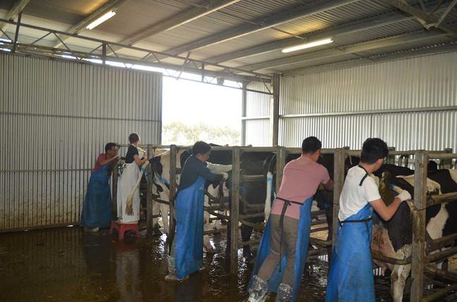 bovine-water-rectum-ax.jpg
