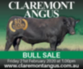 1202 CLAREMONT ANGUS AD2.png