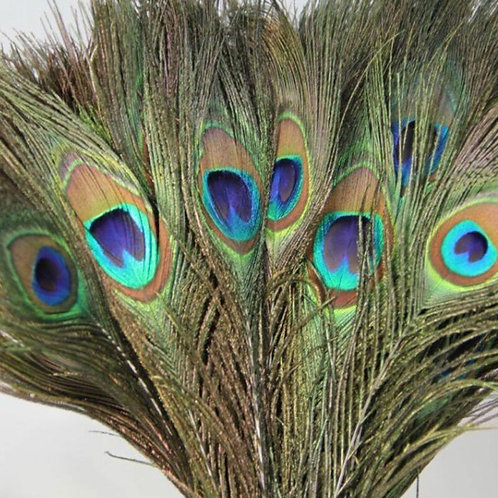 Natural Peacock Tail Eyes Feathers 25 - 30cm long (approx)
