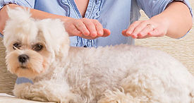 animal-reiki-dog-400x254.jpg