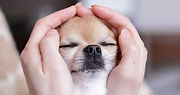 animal-reiki-dog-486x352.jpg