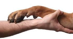 animal-reiki-dog-.jpg