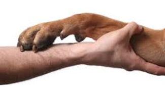 animal-reiki-dog-.jpg